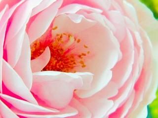 花びら 2.jpg