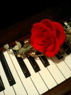 赤いバラ.jpg