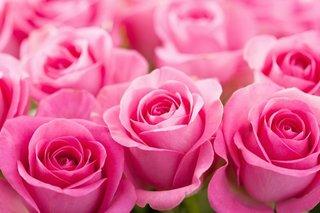 Rose 7.jpg