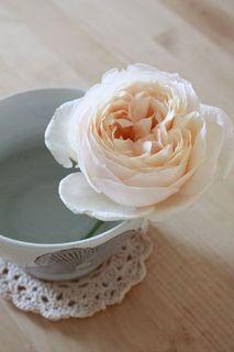 Rose ローズマリー.jpg