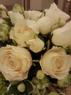 Rose 柏3.jpg