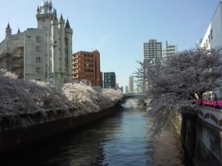 Sakura 目黒の桜2 2015.jpg
