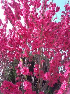 花もも .jpg