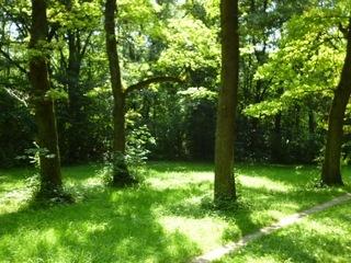 ドイツの森.jpg