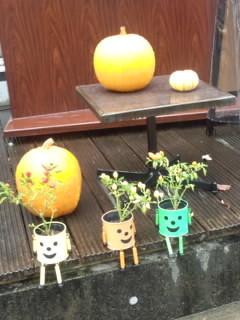 微笑む植木鉢たち.jpg