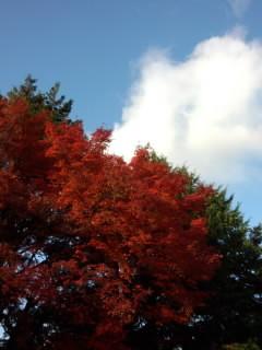 紅葉と空.jpg