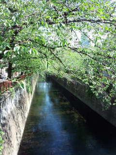 Garden  目黒川.jpg