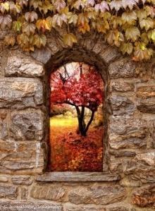 秋の小窓.jpg