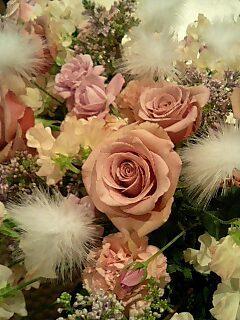 天使の薔薇.jpg