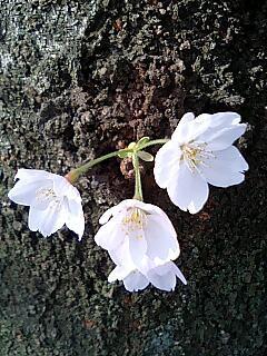 幹より咲く花.jpg