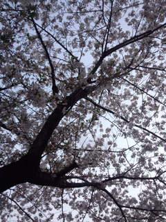 桜 2020-4.jpg