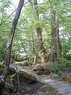 森の小道.jpg