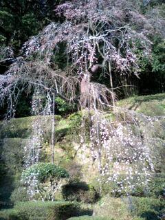 雪舟庭園.jpg