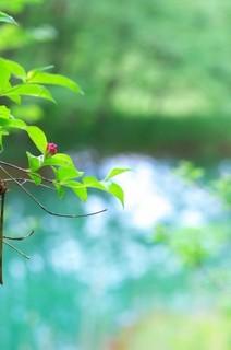 水辺の小枝.jpg