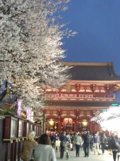 浅草 桜.jpg