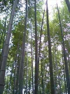 竹のかおり.jpg
